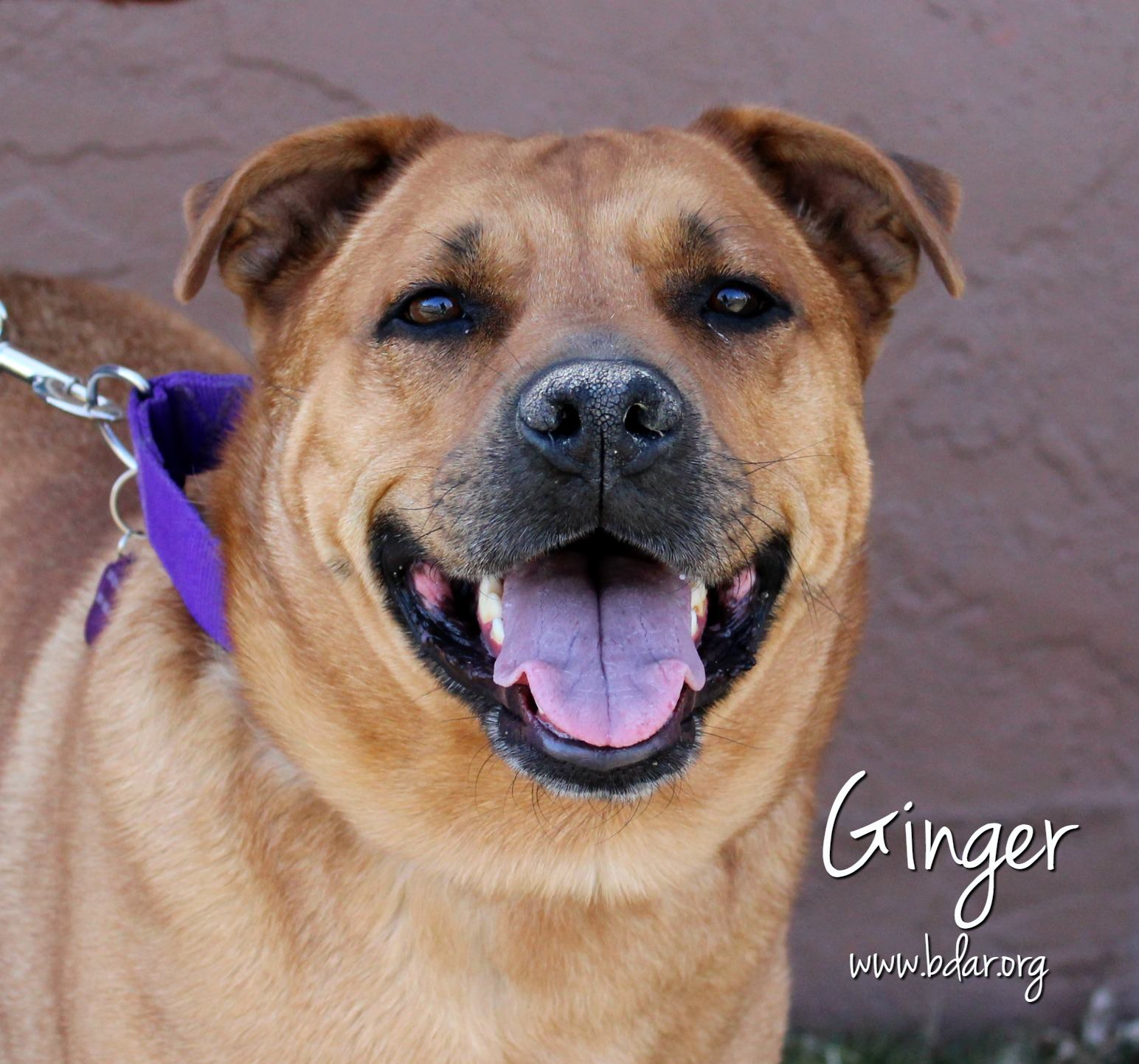 Ginger (whose seizure condition made her ineligible for adoption) was able to live out her life in foster care because of Clyde's fund.