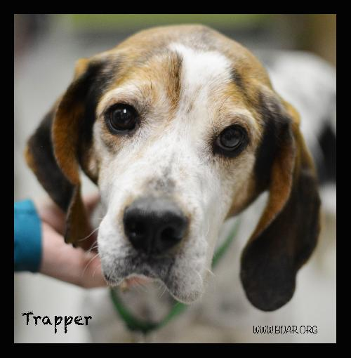 Trapper's original adoption photo in 2013.