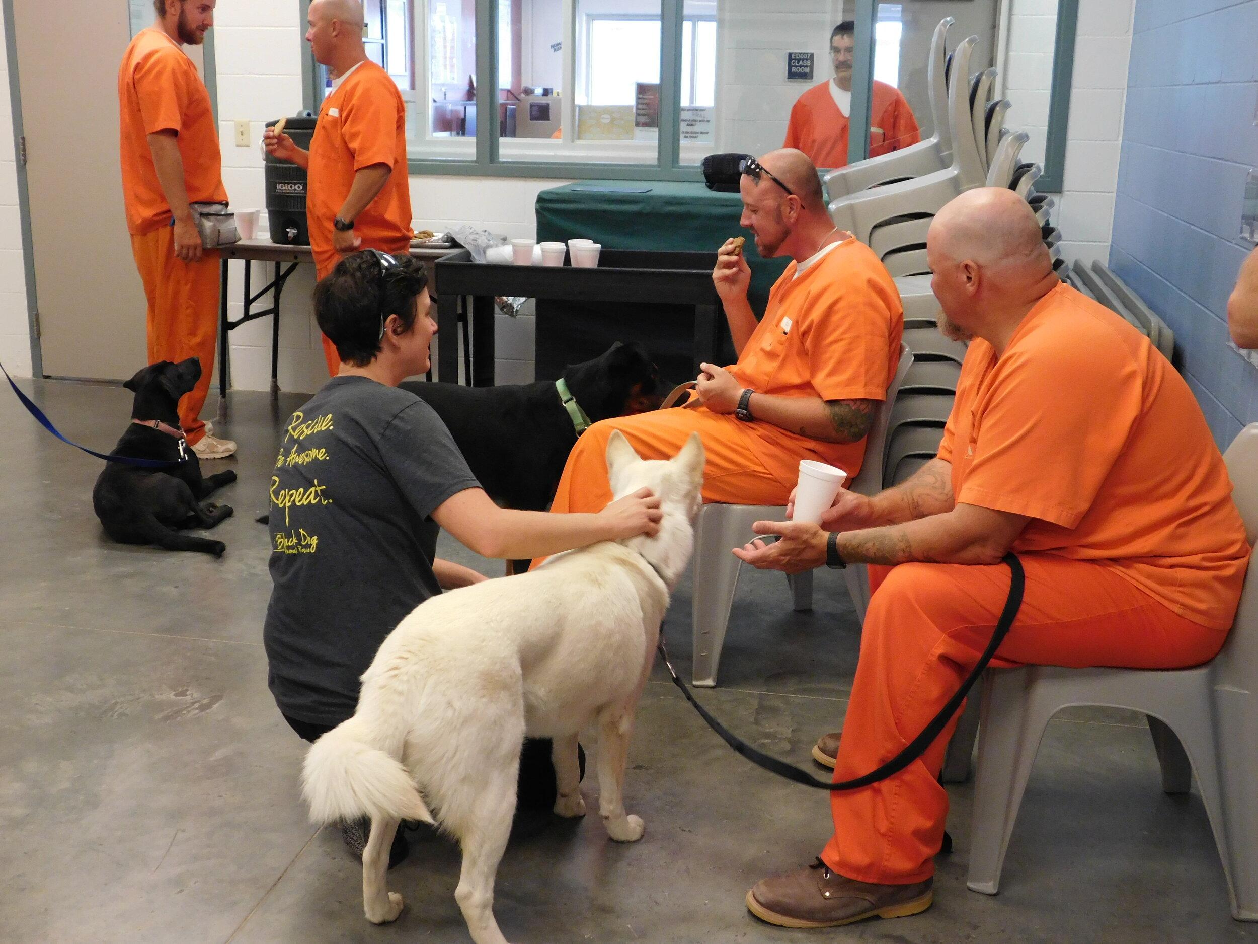 Unique Programs Black Dog Animal Rescue