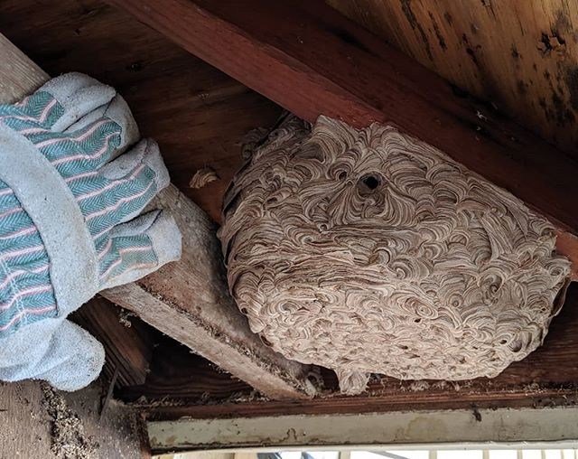 Step 2: Remove the nest 😱 #wasps #evicted