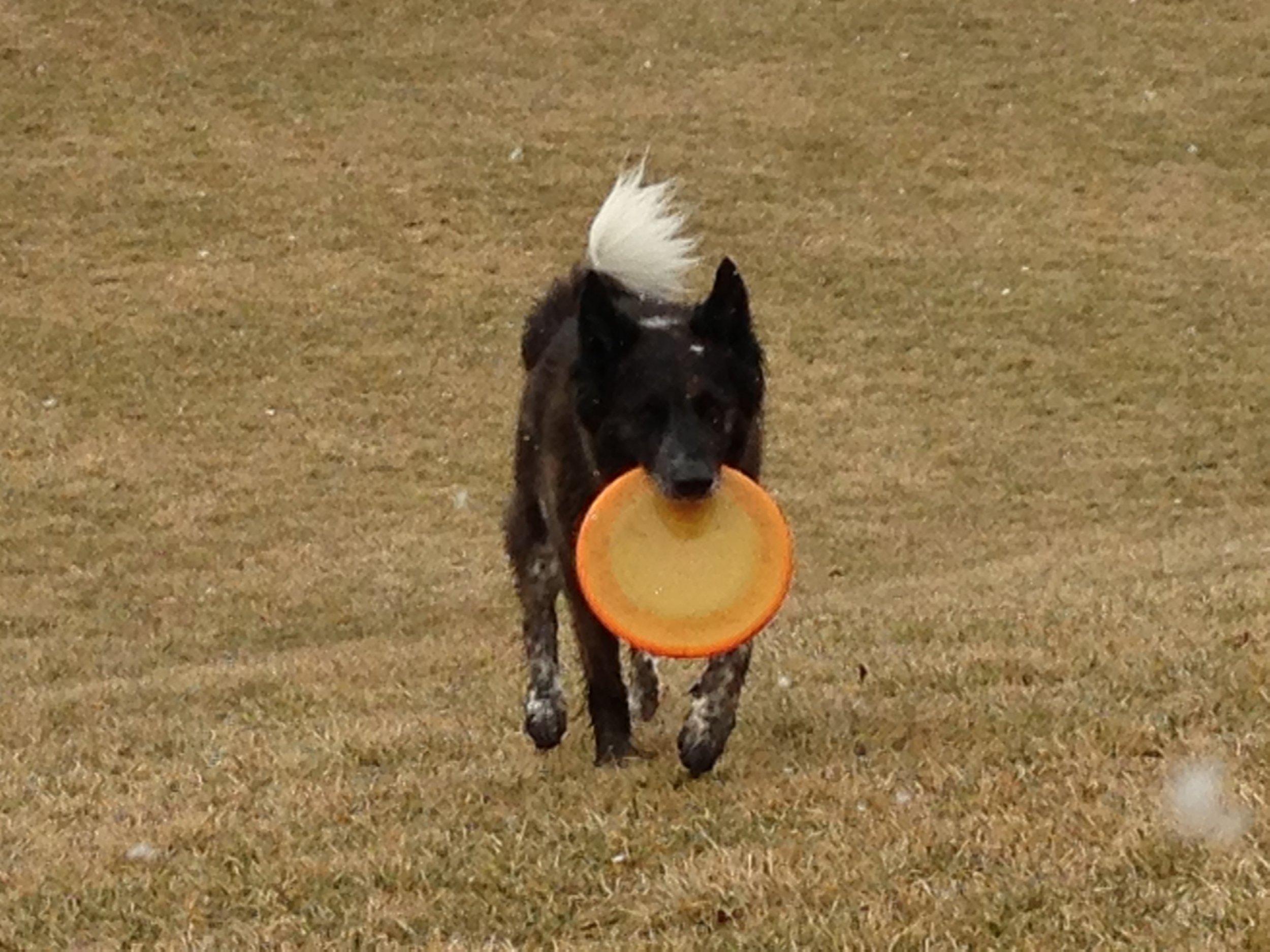 Fred - frisbee 2.jpg