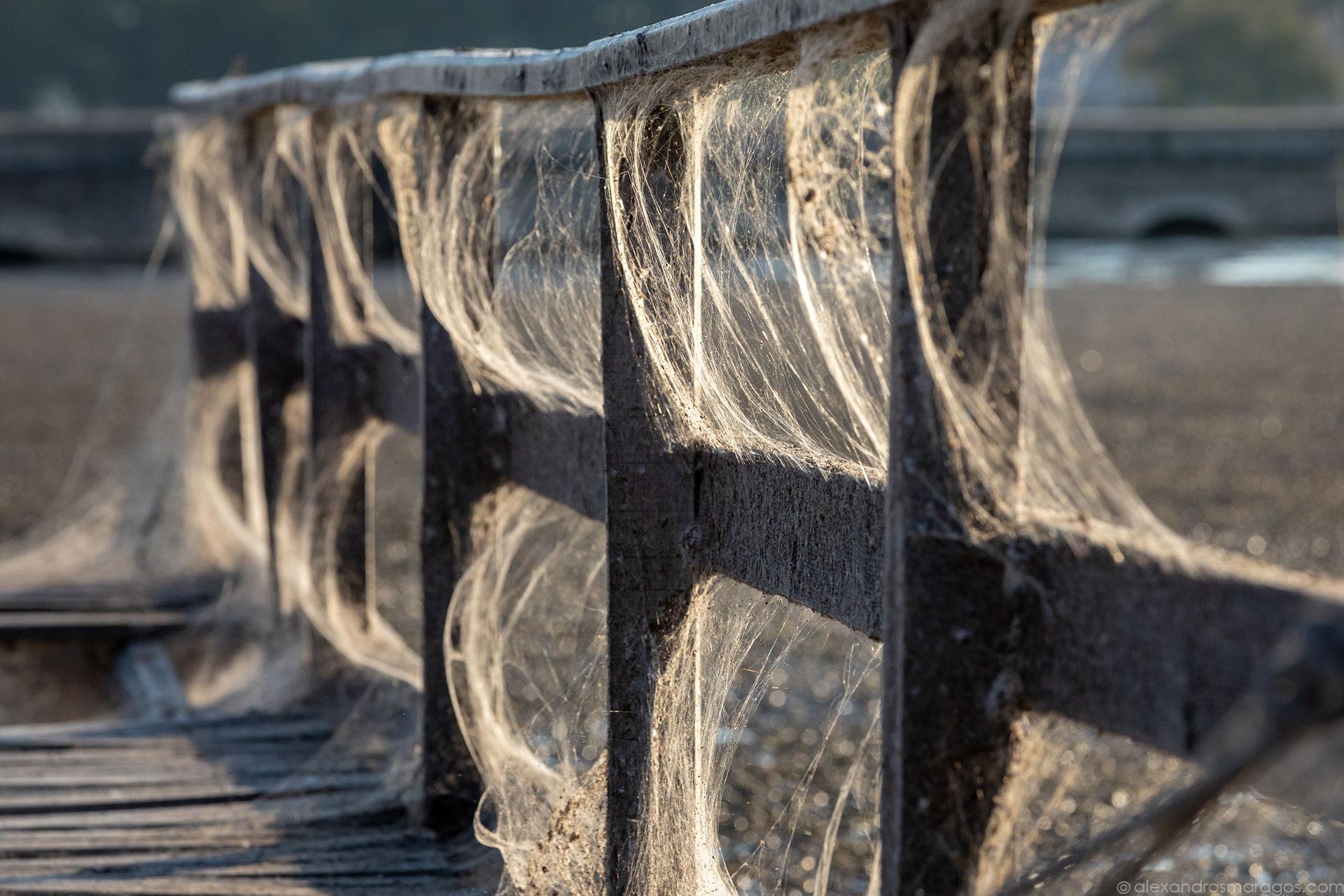 The Aitoliko Spiderweb, Greece | © Alexandros Maragos