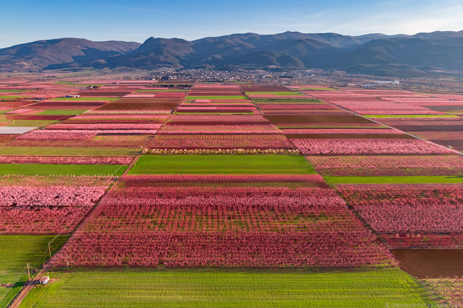 The Flowering Peach Trees of Veria, Greece | © Alexandros Maragos