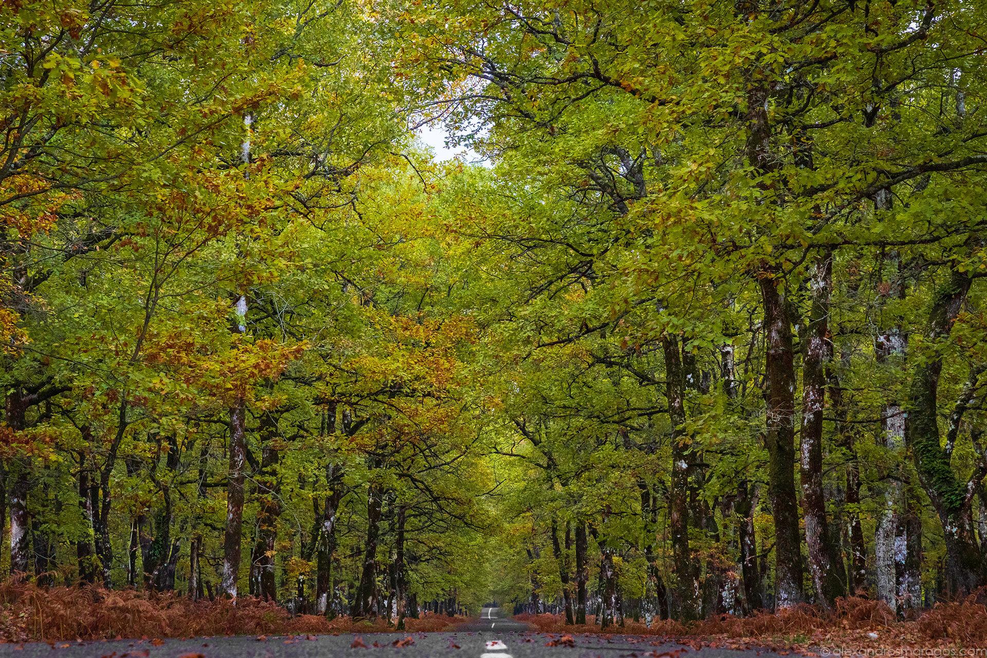 Foloi Oak Forest, Greece