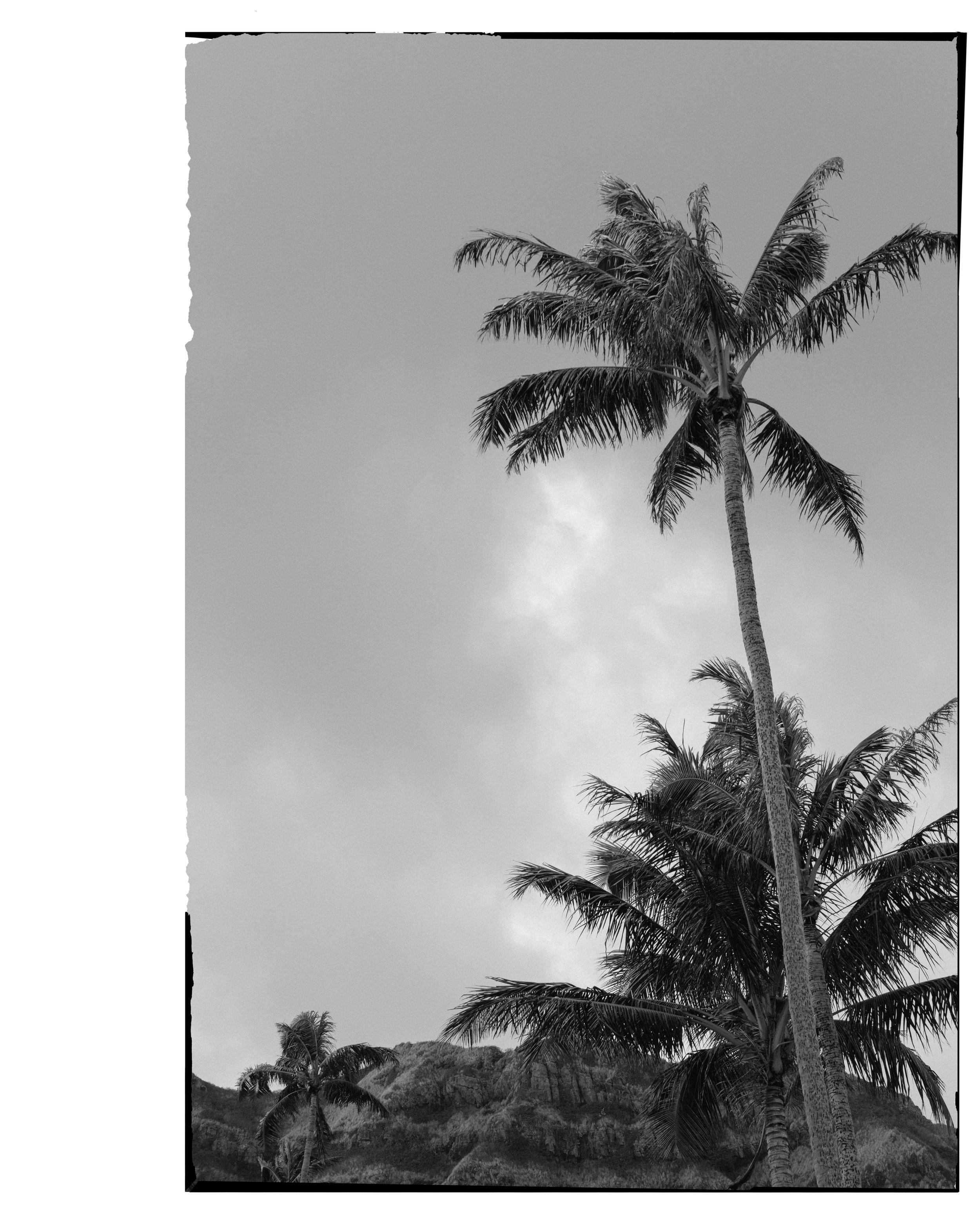 8529_film.jpg