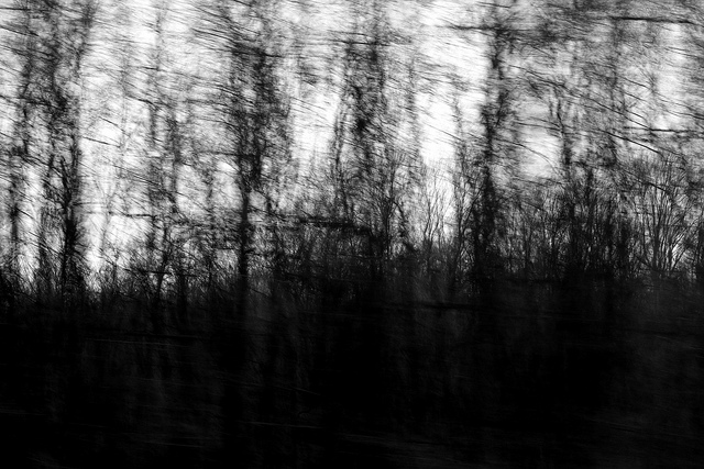 [Image description: blurred black and white photograph of a forest of thin, bare trees. The branches at the bottom of the image are too dense to allow any light to penetrate them.]   enki22 / Creative Commons