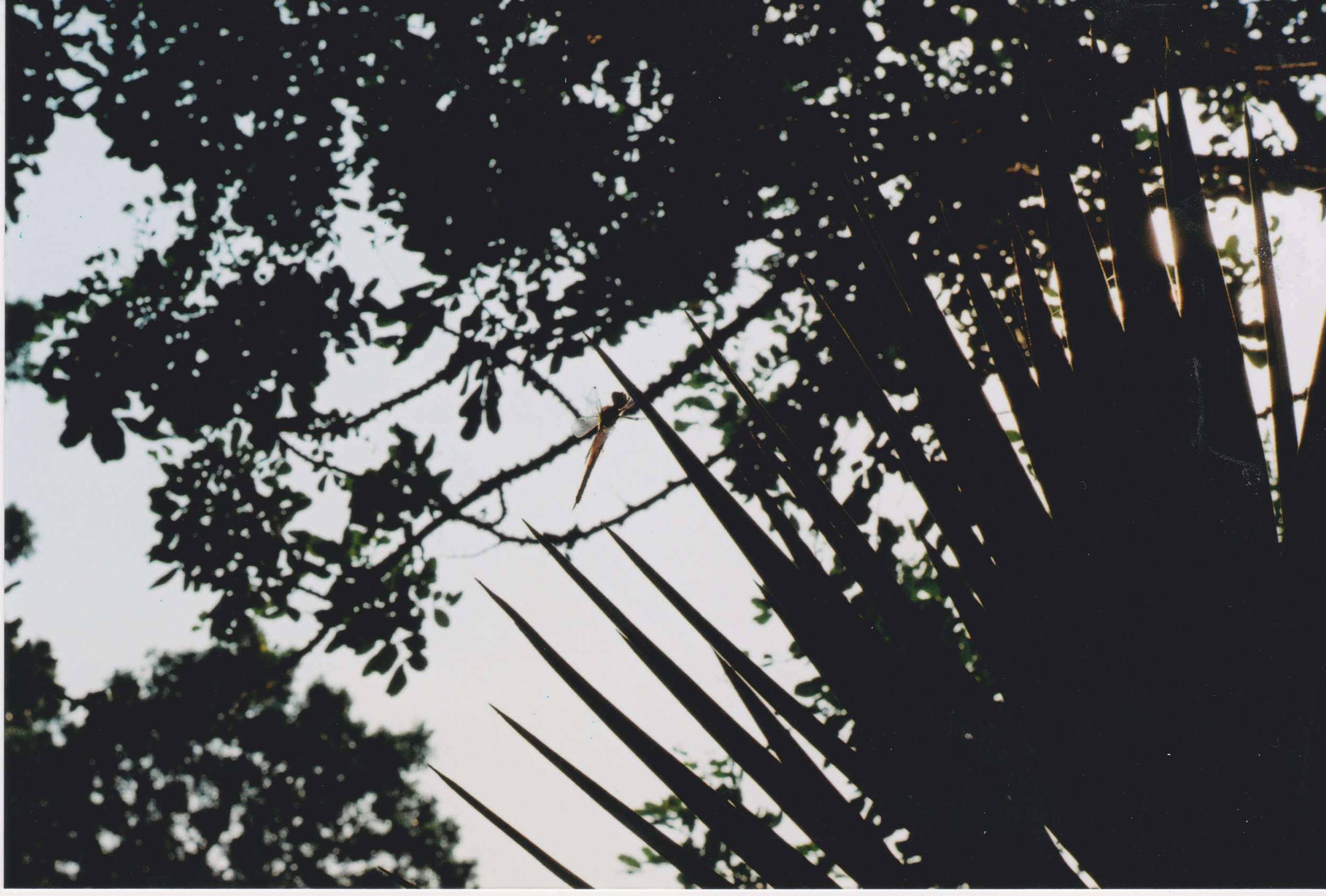 Soph Bonde/Argot Publications    [Image Description: A silhouette of a dragonfly hovers against a large spikey plant]