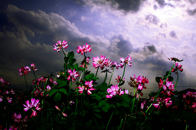 [Image description: close photograph of flowers in a field, illuminated by cloudy sunshine. The flowers line the front of the image, and the sunlight is brightest on the right side.]  Y0$HlMl / Creative Commons