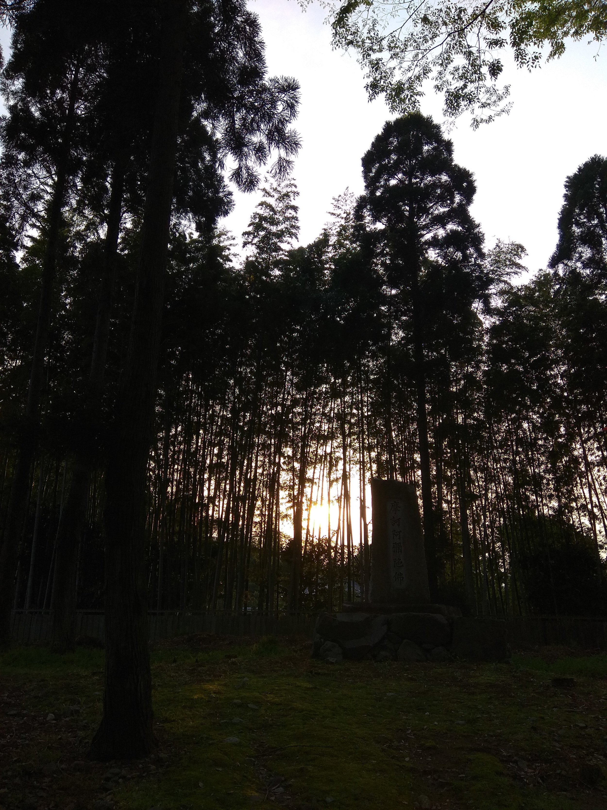 [Image description: photograph of a bright sunset through a forest of slender trees. In the dark foreground, a small stone structure is just visible.]