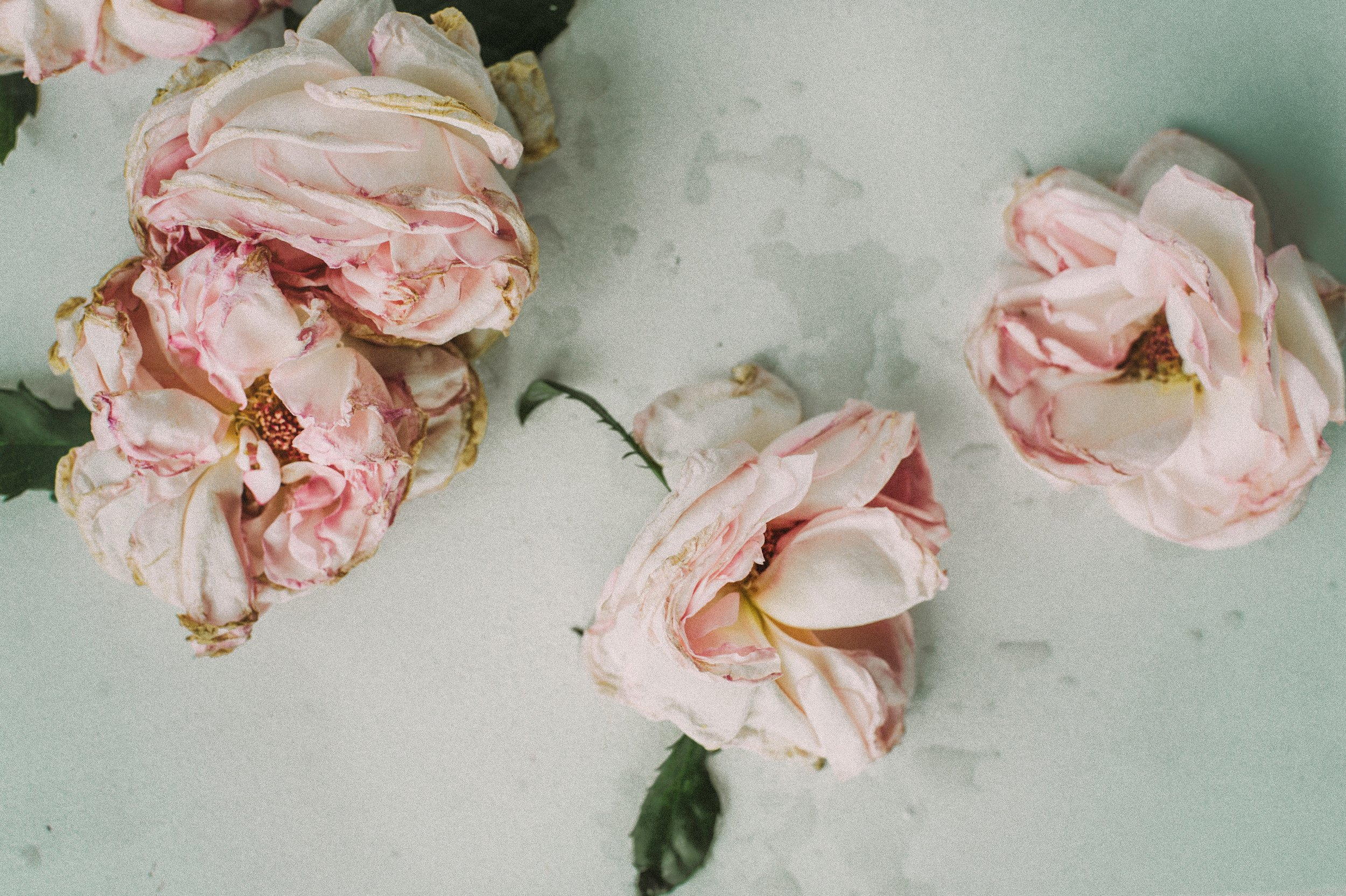 Photo by  Daria Shevtsova  on  Unsplash    [Image Description: Wilted pink roses, with a touch of brown on the edges, lay flat on a marble background with water stains]