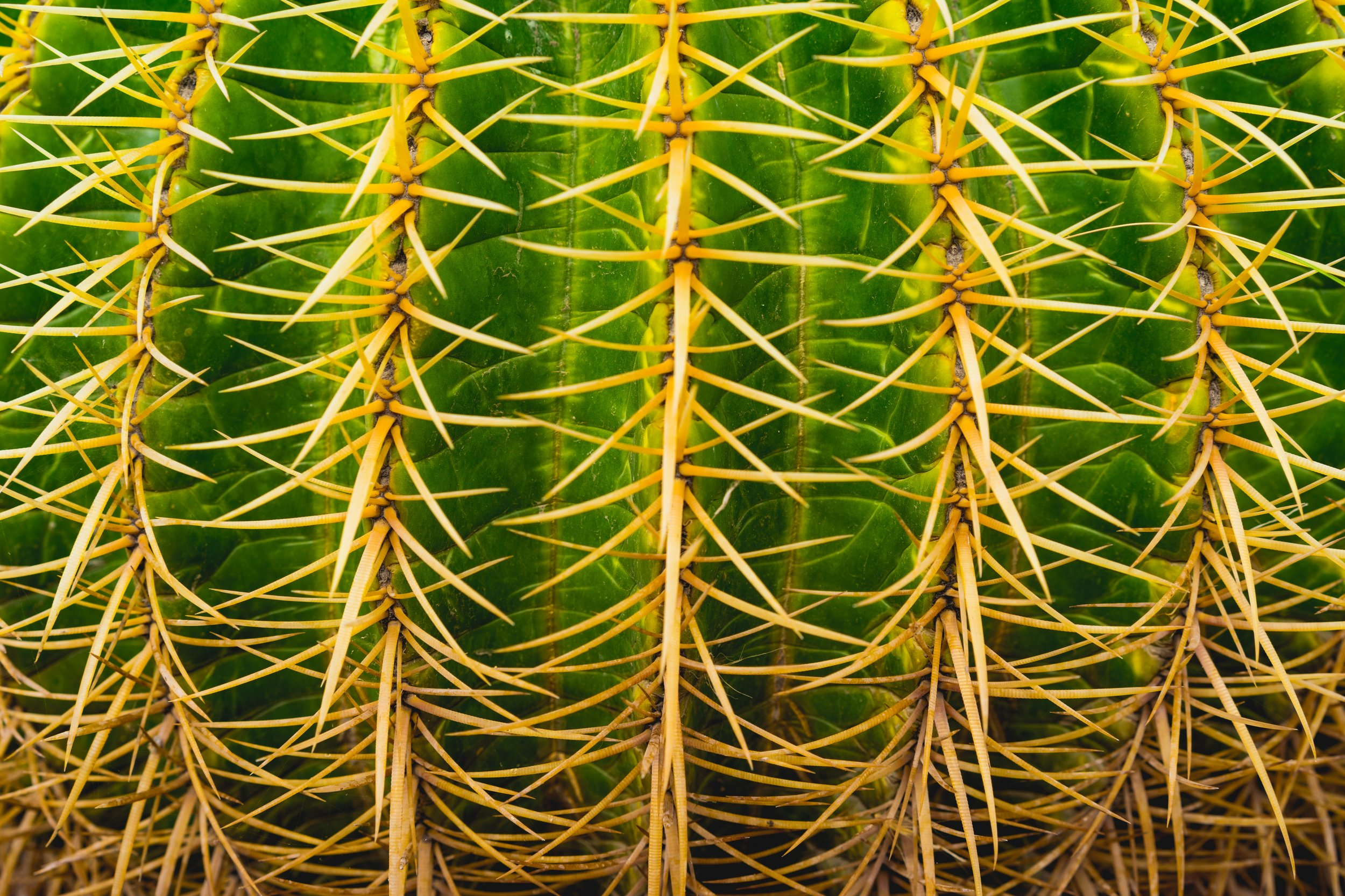 Photo by  Dan Gold  on  Unsplash    [Image Description: A macro shot of cactus needles in vertical rows on top of vivid green ridges]