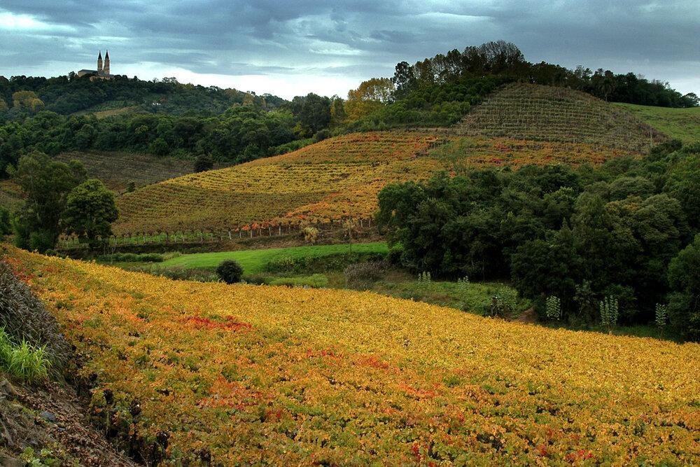 Primeira Denominação de Origem (DO) do Brasil, o Vale dos Vinhedos está situado na Serra Gaúcha, no triângulo formado pelos municípios de Bento Gonçalves, Garibaldi e Monte Belo do Sul; na imagem, vinhedos em Monte Belo (Crédito: Wikipedia).