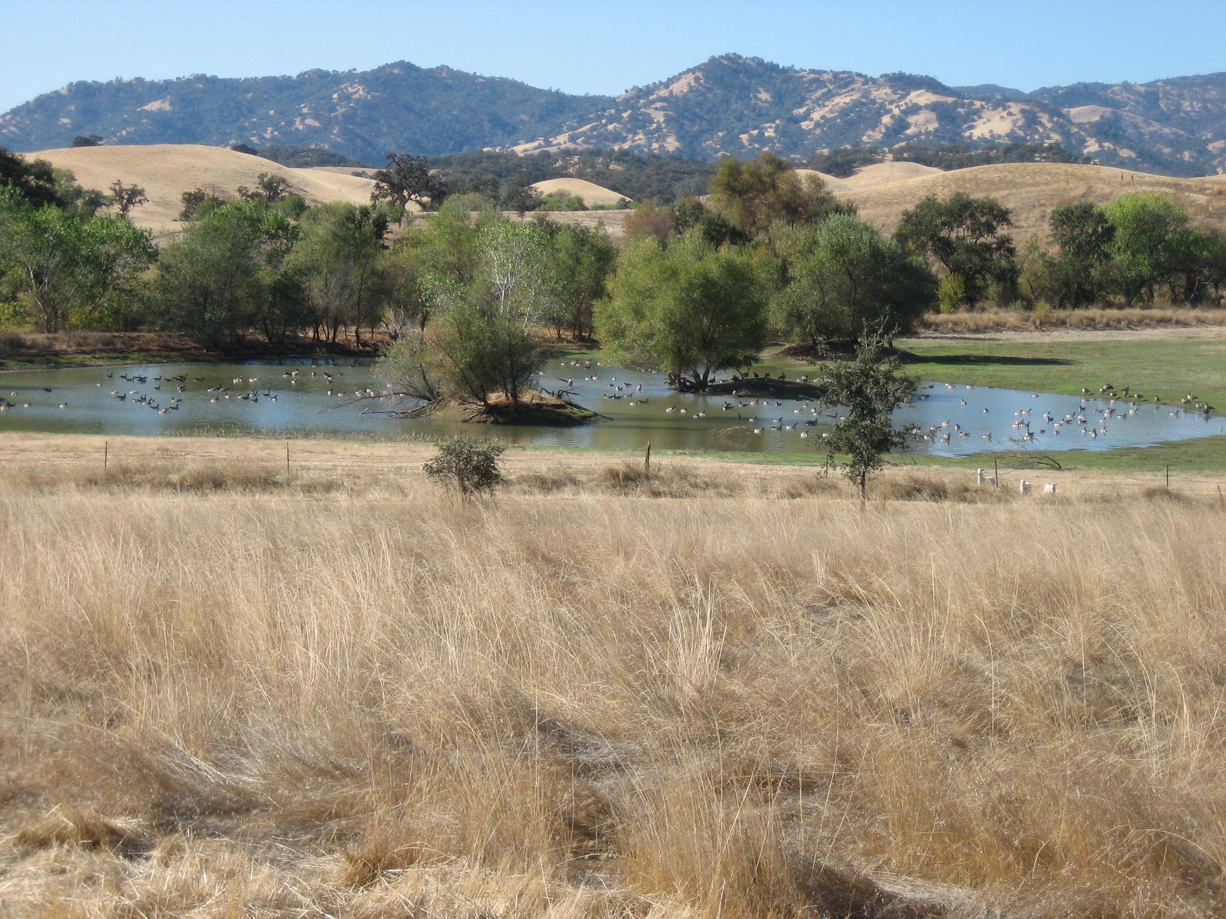 Western wetlands, 2006