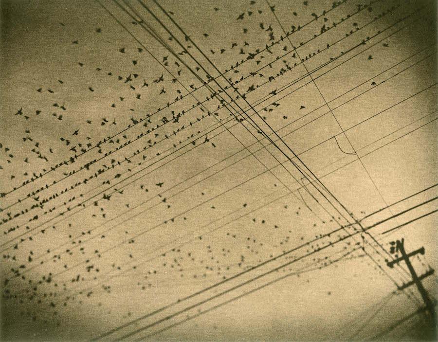 Birds, Harrison Street