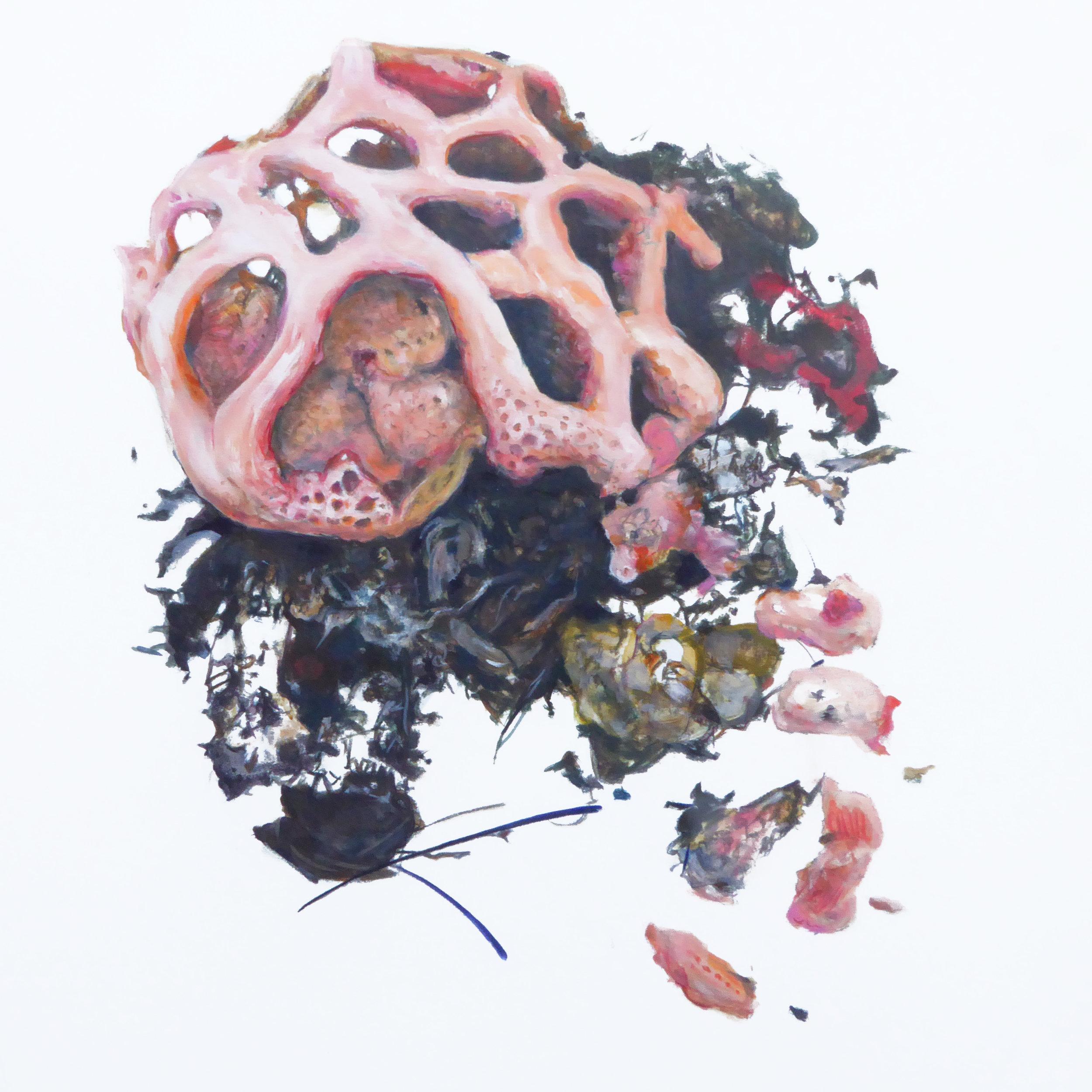 Lattice Stinkhorn Mushroom