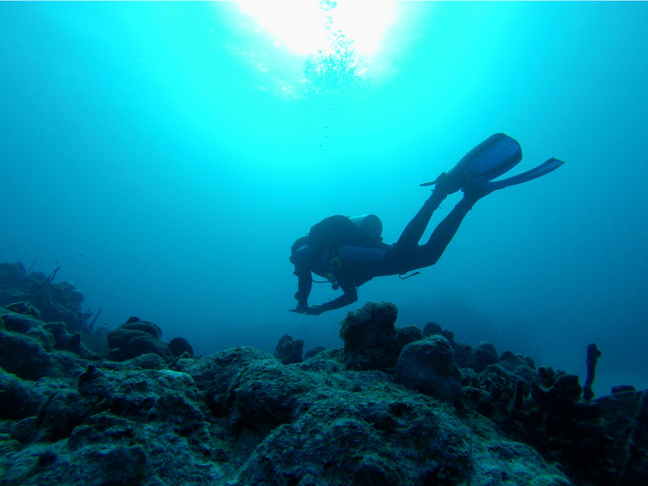 a marine mammal   (GoPro Hero3,New England Aquarium Fall Collecting Trip; Bimini, Bahamas 2015)