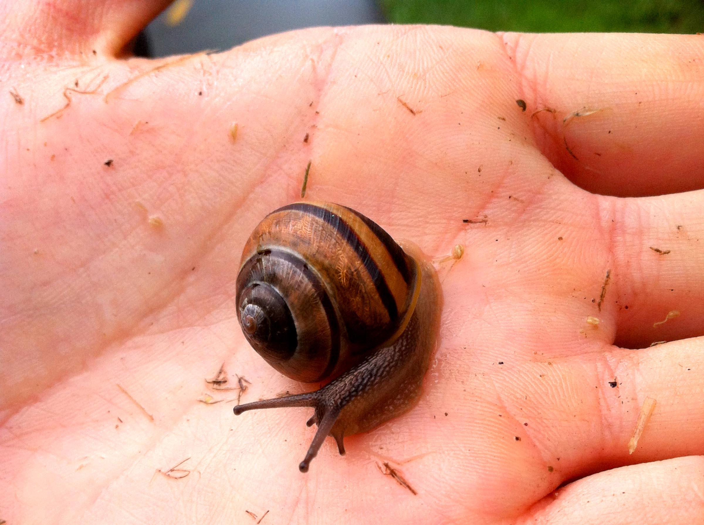 snail friend  (iPhone 4, Massachusetts 2015)