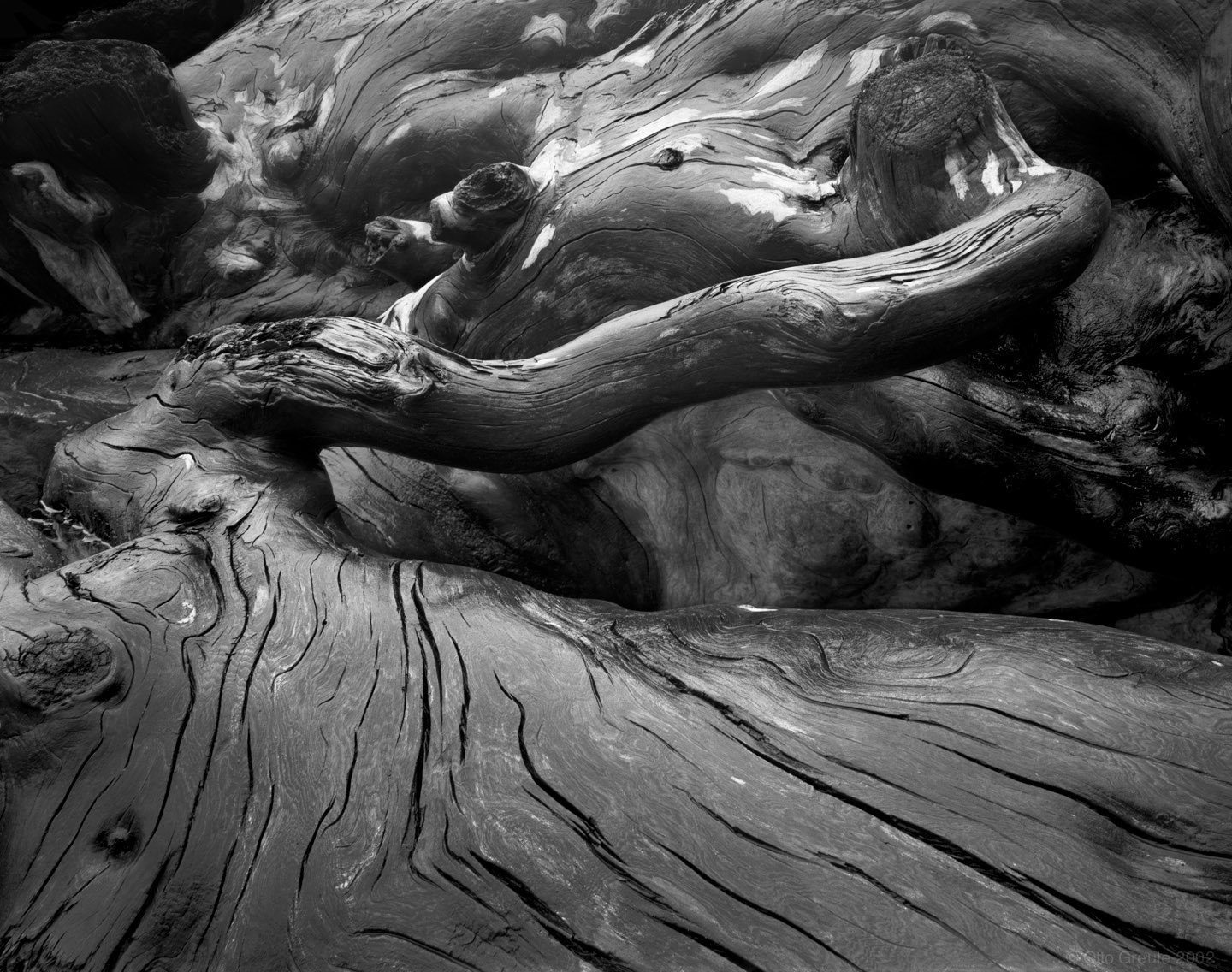 Driftwood, Olympic Wilderness Coast, WA.