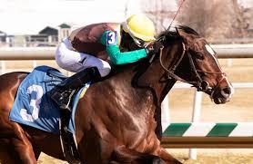 Bullish on Alwaysmining at the Preakness (Photo, Horse Racing Nation).