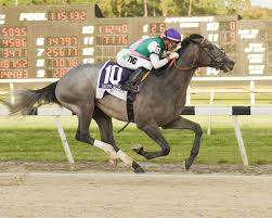 Like Tacitus to take the third jewel in the Triple Crown (Photo, Kentucky Derby).        Prediction for the RBC Canadian      I'm going to take the 38 year old from Nashville this week. He won this event in 2013, and I like him this year after he shot 67, 68 and 69 the last 3 days at the Charles Schwab Challenge in Fort Worth 2 weeks ago. He has also won the AT&T Pebble Beach (2013 and 2015) where the 119th U.S. Open will be played next week.      Give me      Sneds