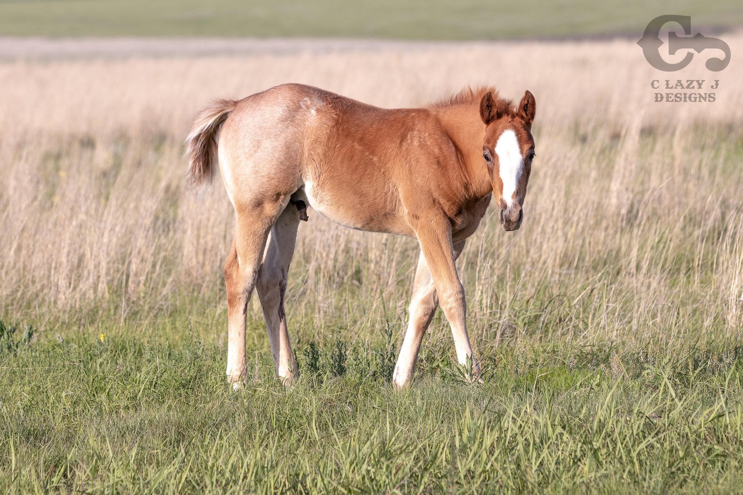 Breeding — Perry Quarter Horses
