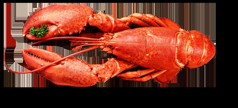 Lobster Top Seafood