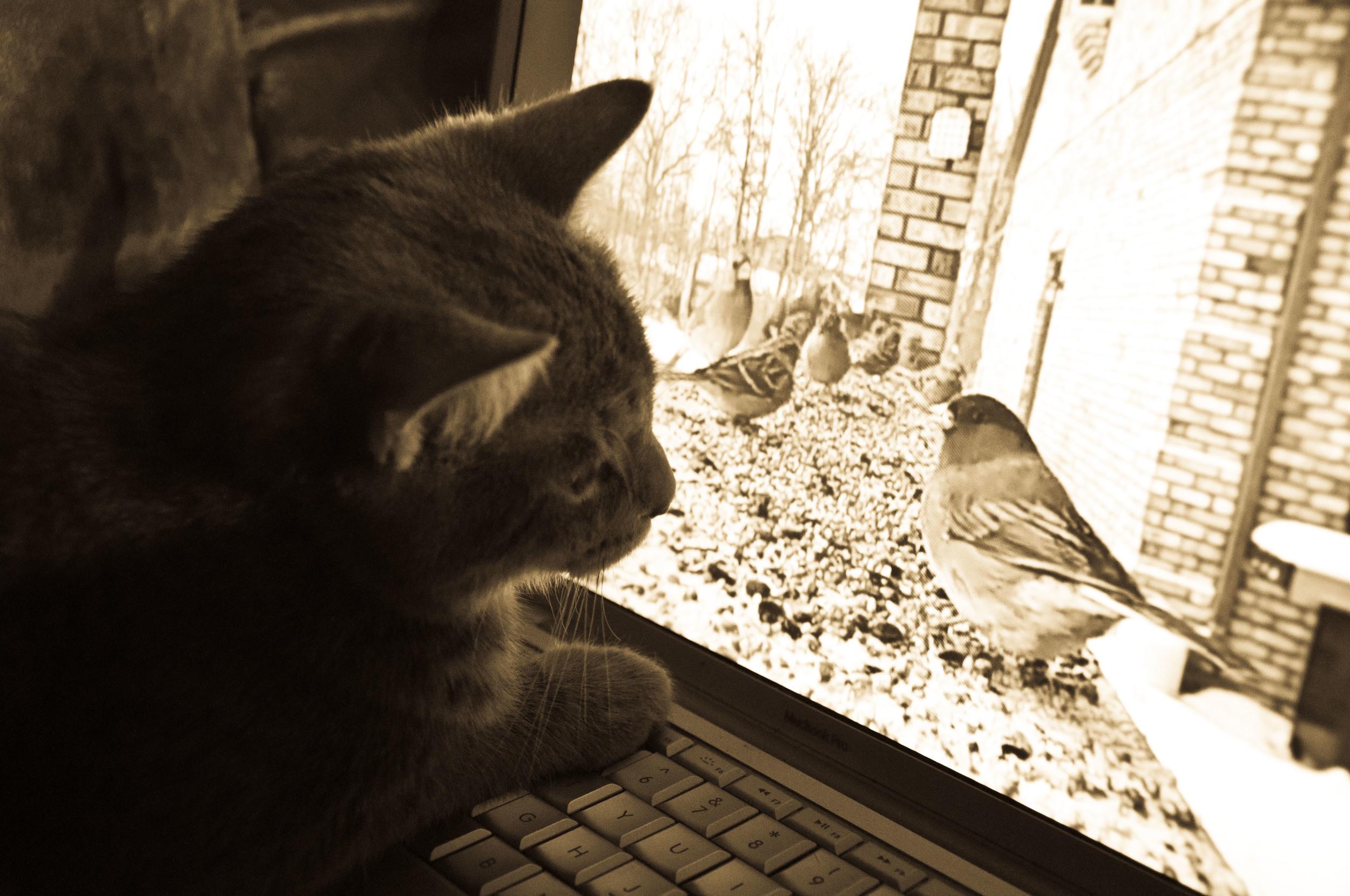 kitten-pics-for-blog-4.jpg