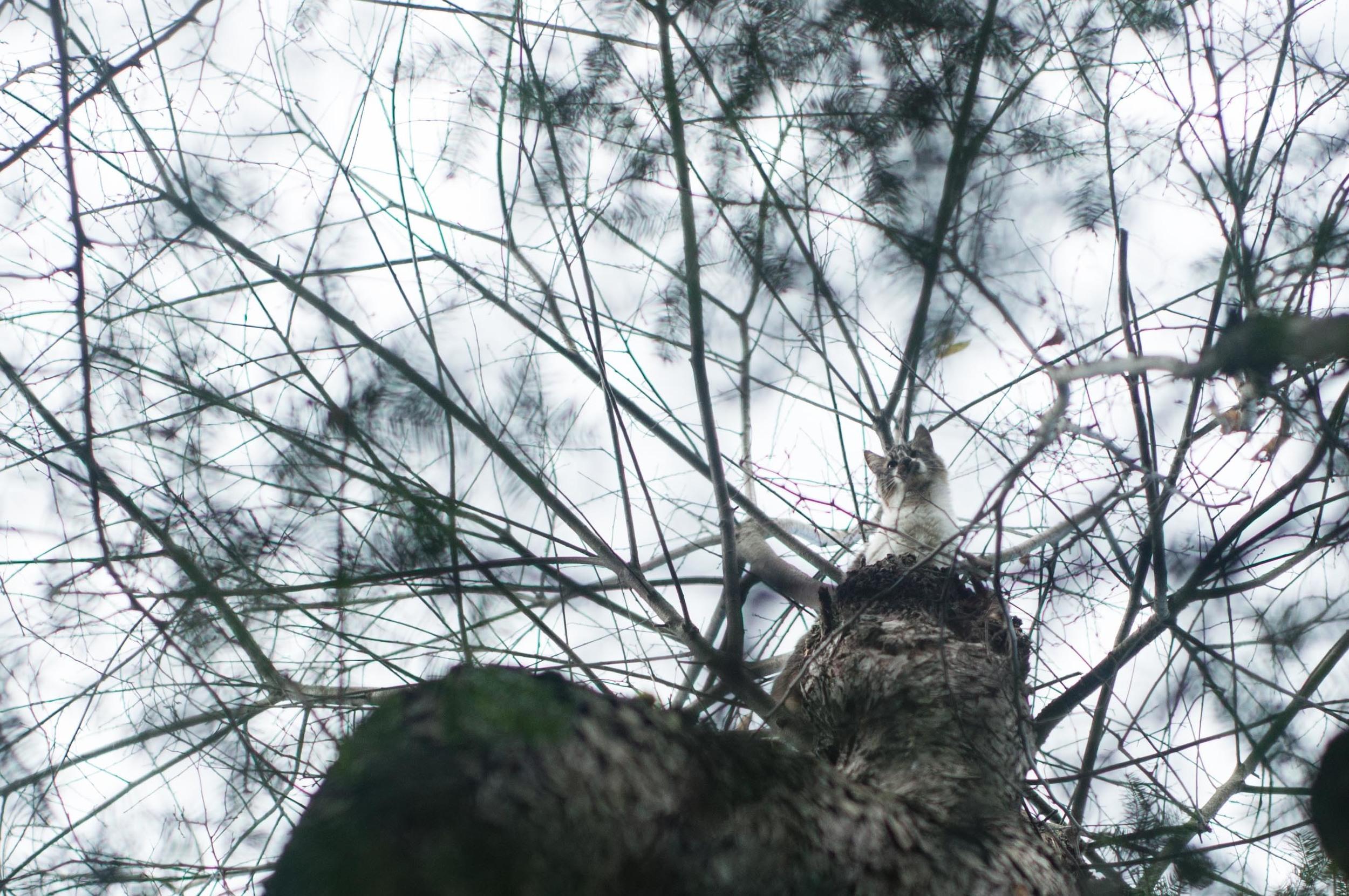 sophie-cat-in-a-tree-5.jpg