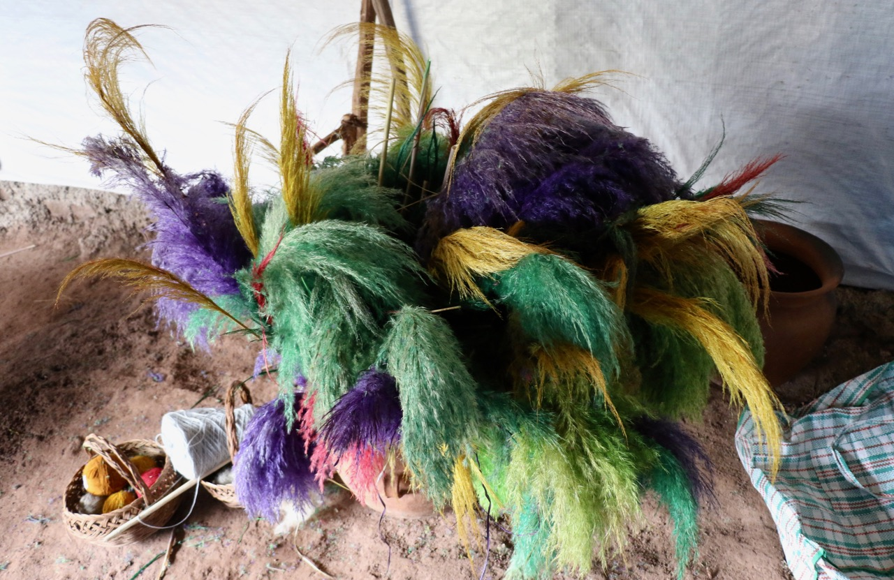 Plants for dyes