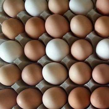 Beyond Organic Eggs from Cloud 9 Farms