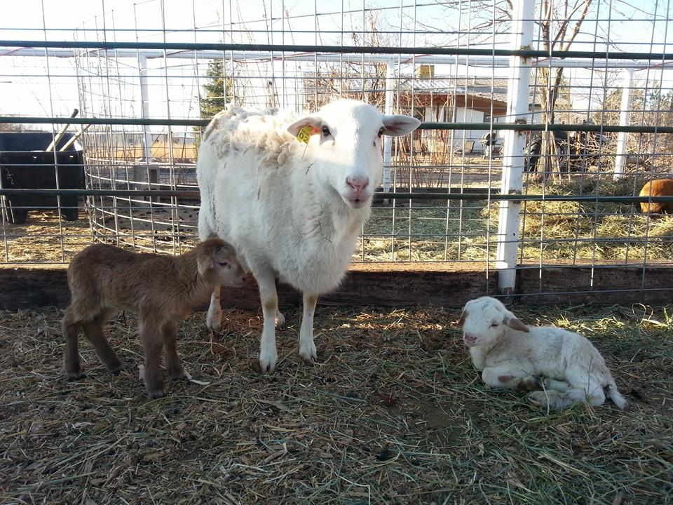 Two more new arrivals in March 2016