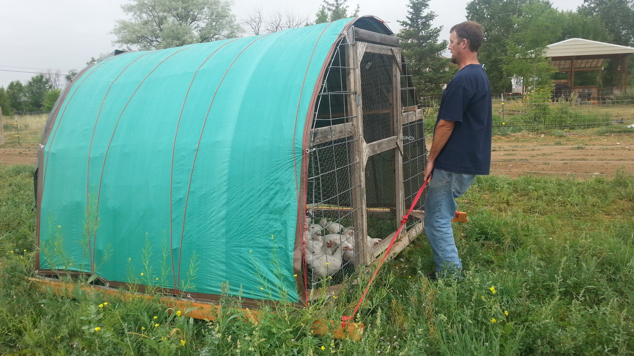 Chickens moved to fresh grass daily!