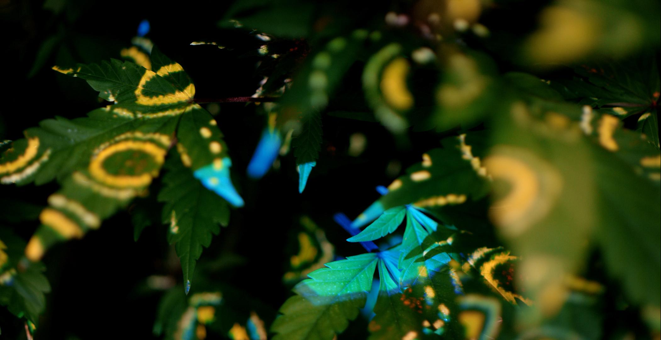 Botanist-05.jpg