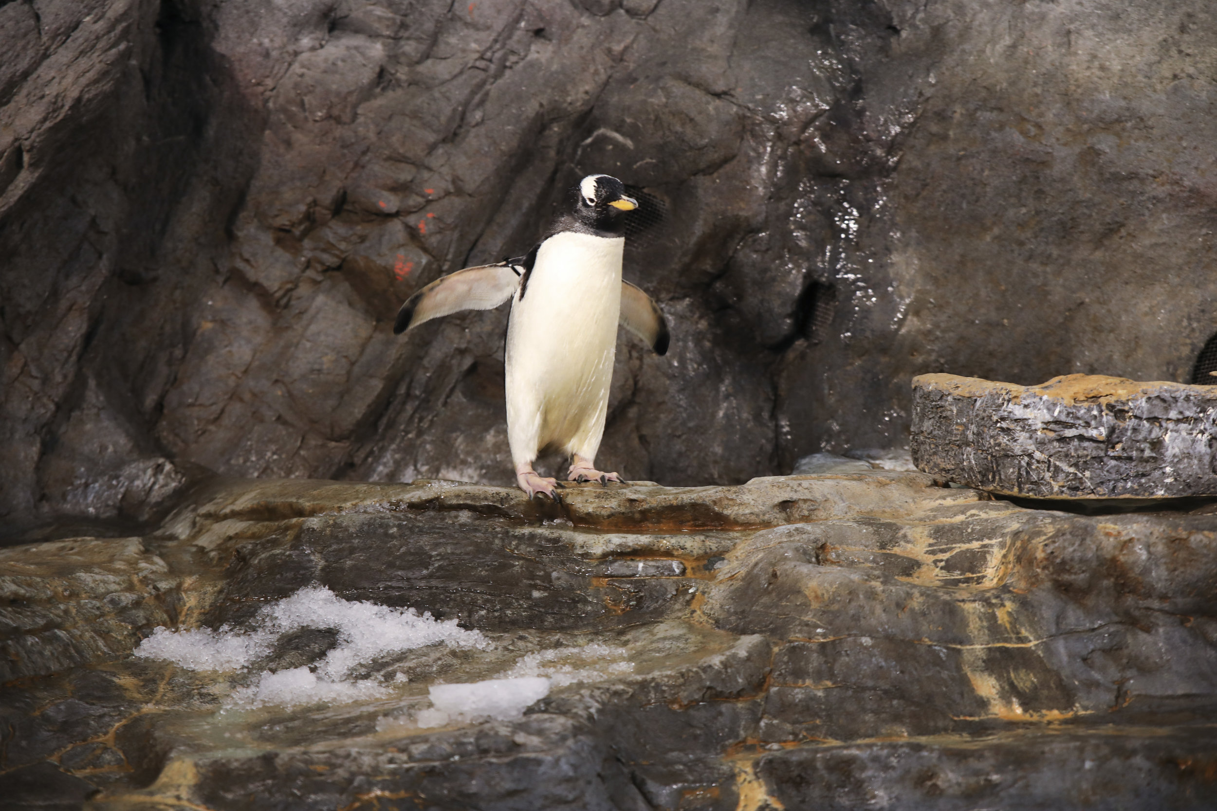 Saint_Louis_Zoo_Photography_Penguin_House.jpg