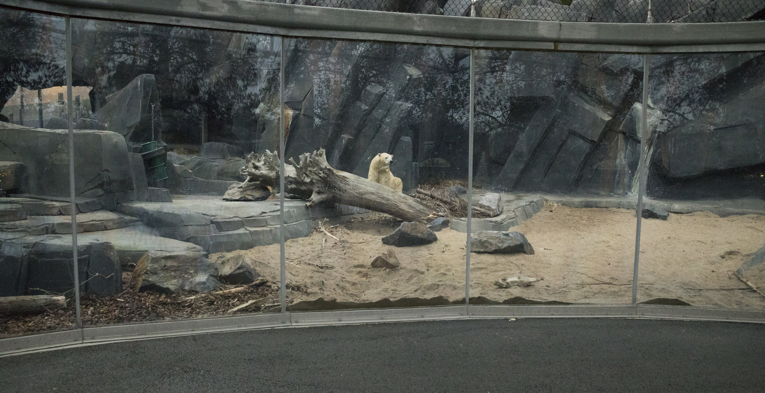 Saint_Louis_Zoo_Photographer_Polar_Bear_Exhibit.jpg