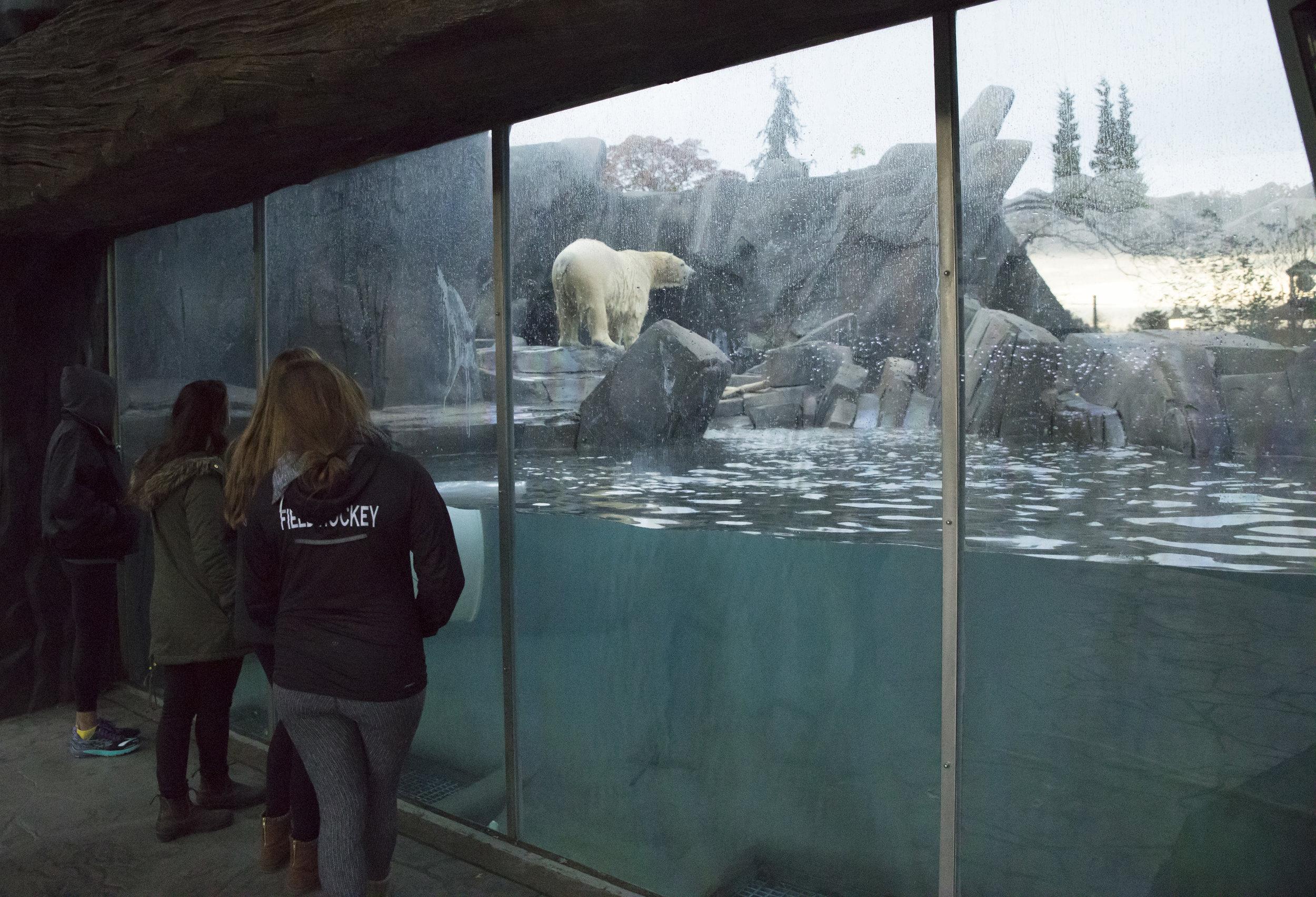 STL_Zoo_Bear.jpg