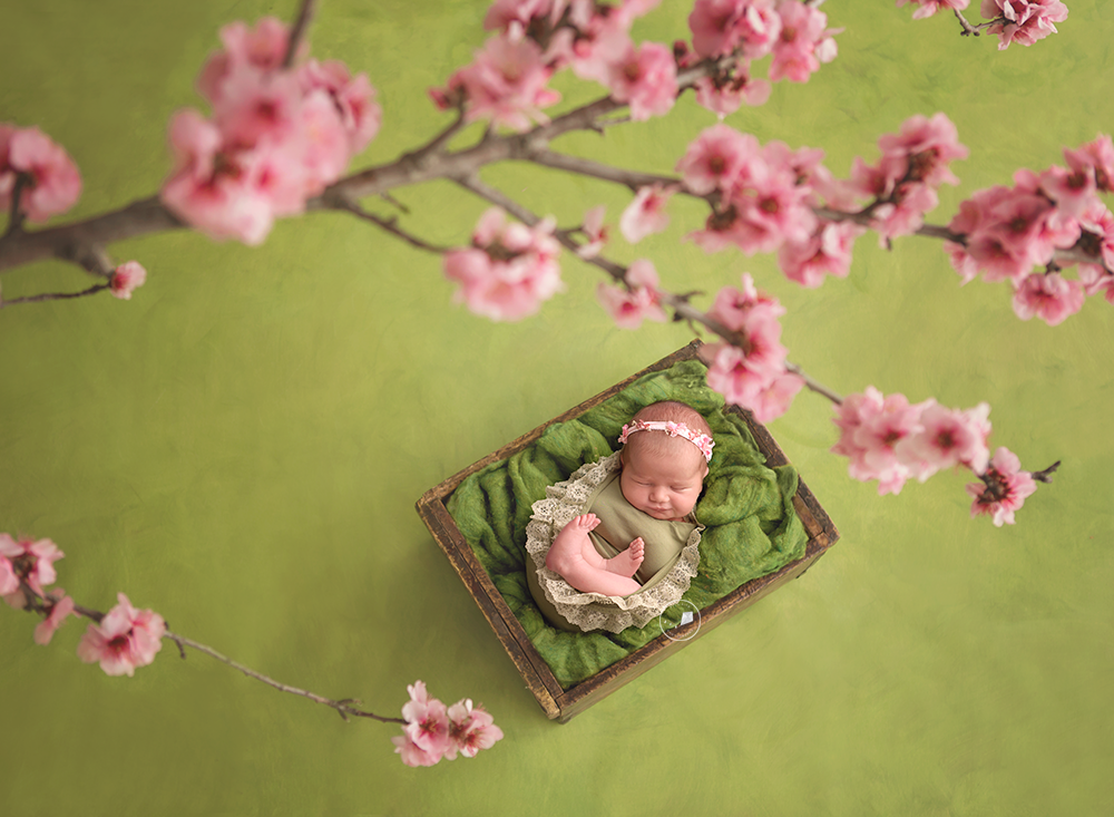 Boca-Raton-newborn-photographer-blossoms.png