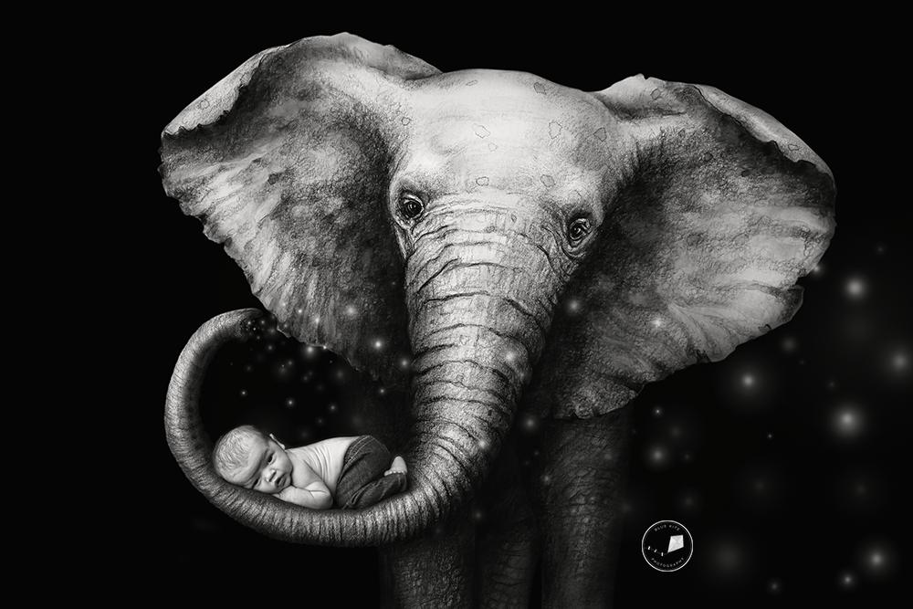 Elephant-nursery-newborn-session-Edit.png