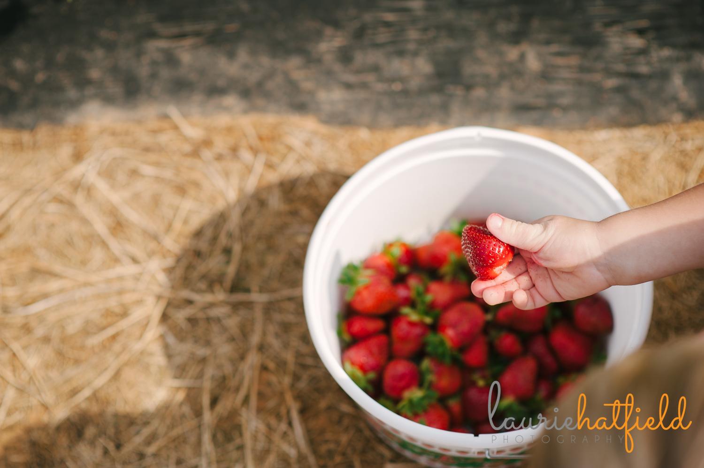 bucket of strawberries   Huntsville photographer