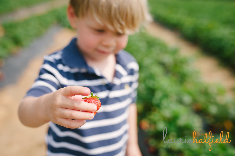 little boy with strawberry   Huntsville child photographer