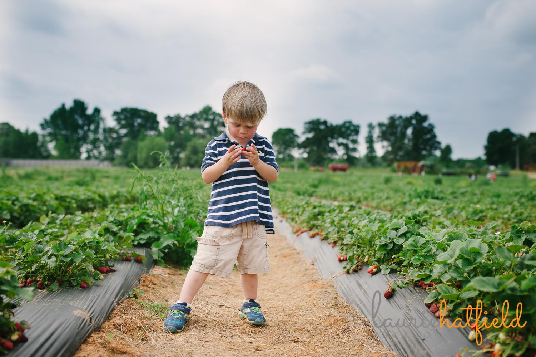 boy eating strawberry   Huntsville family photographer