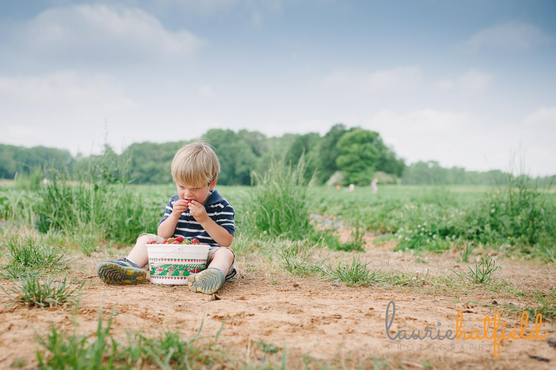 2-year-old in strawberry field   Huntsville photographer