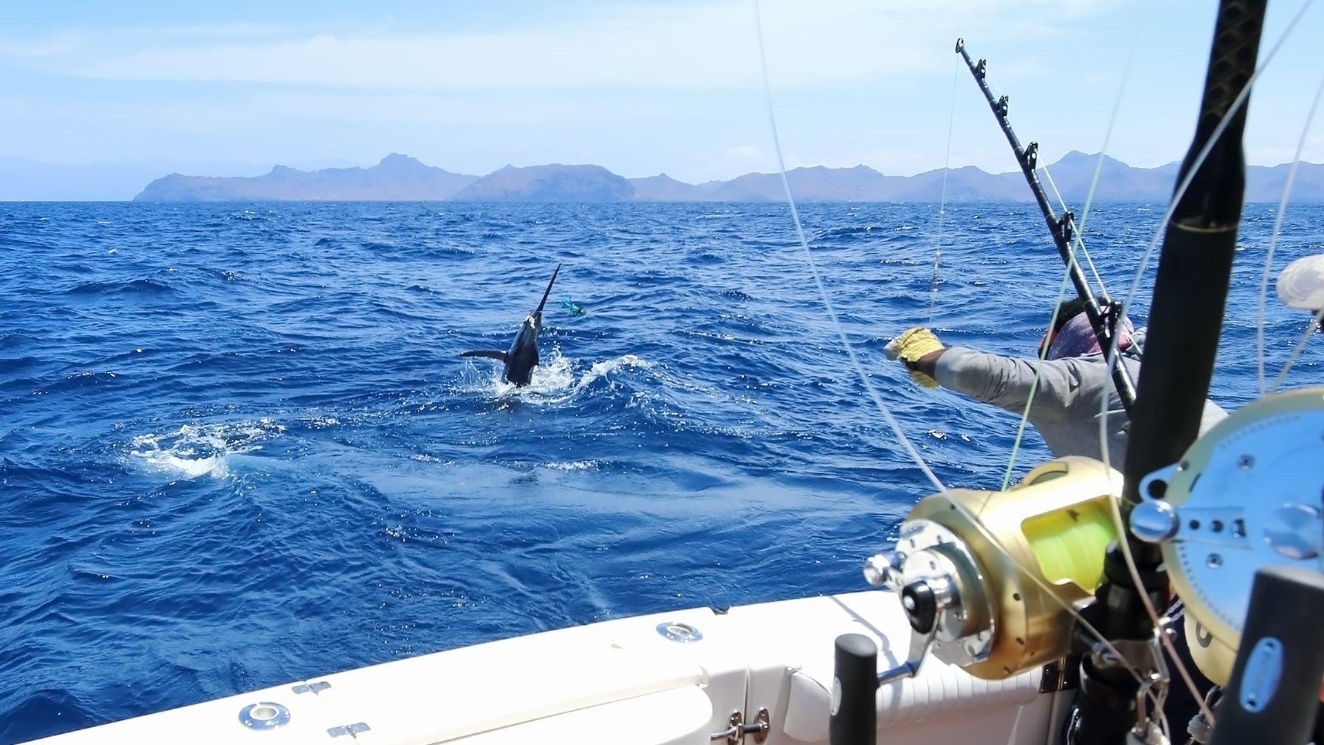 sip-bkg-sailfish-03.jpg