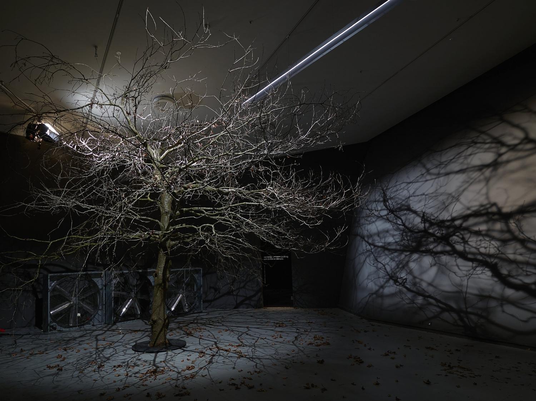 「樹」©Hans Wilschut攝影,EYE電影博物館提供