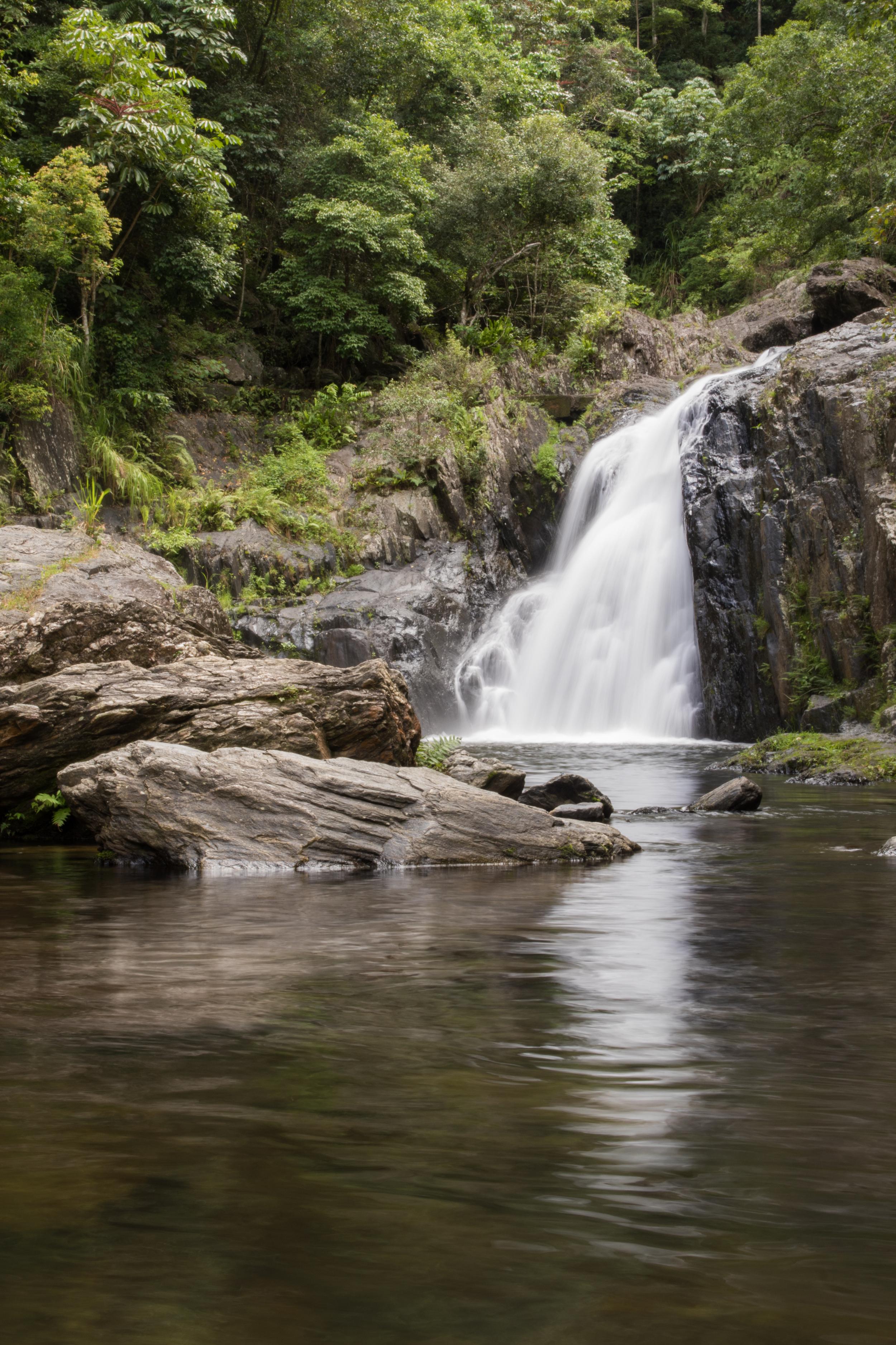 Rainforest-11.jpg
