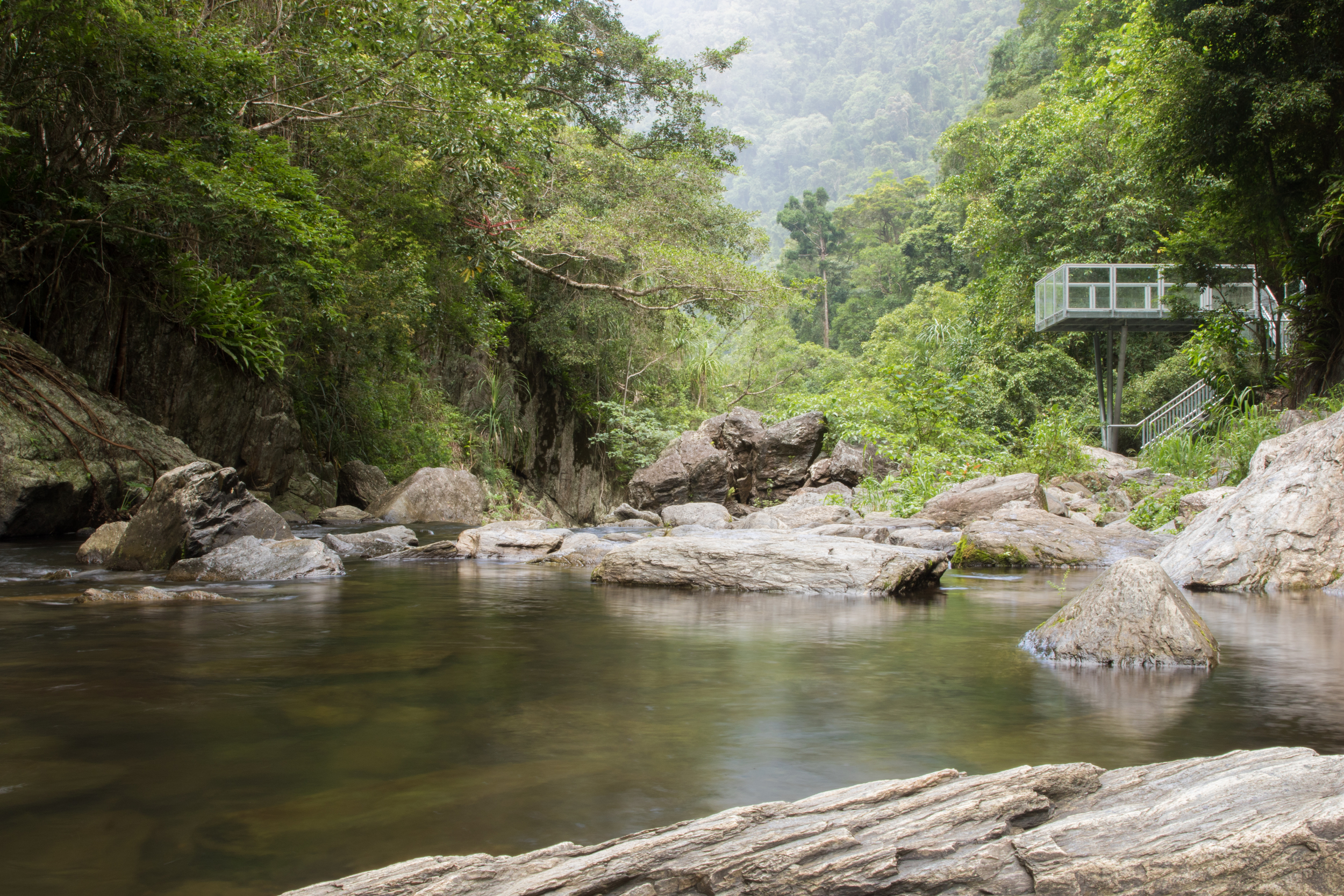 Rainforest-14.jpg