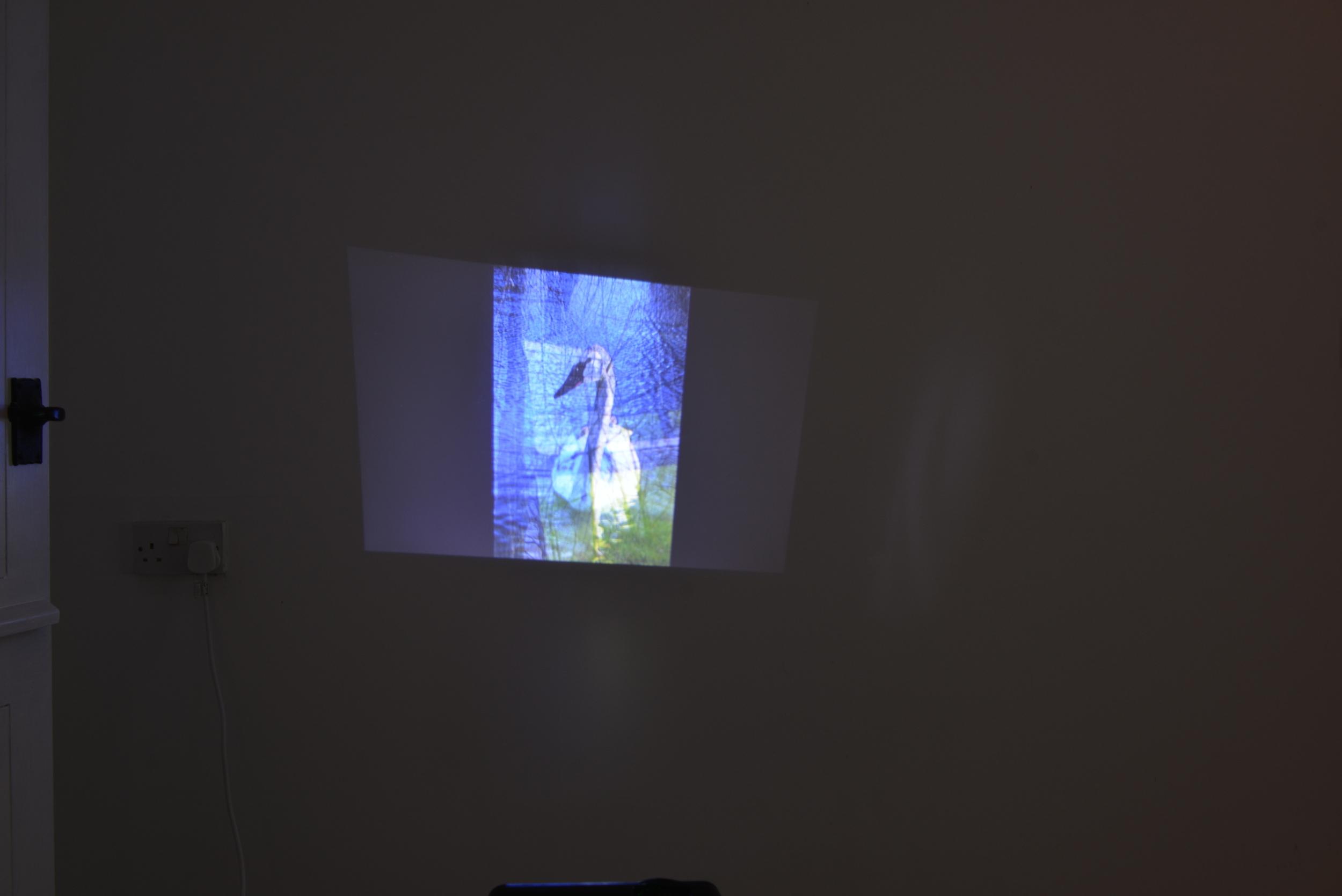 Hannah Cook ,  Slideshow , 2016