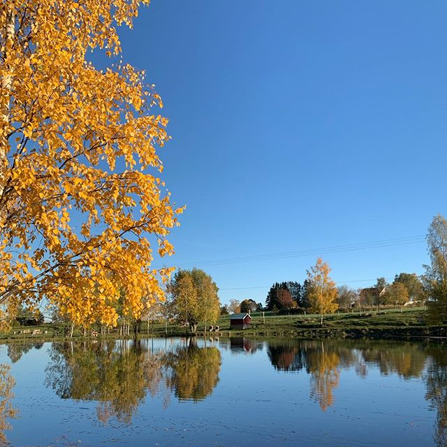 Endelig en dag med sol! #høst #ousdalgard #vakkert #telemarksfe