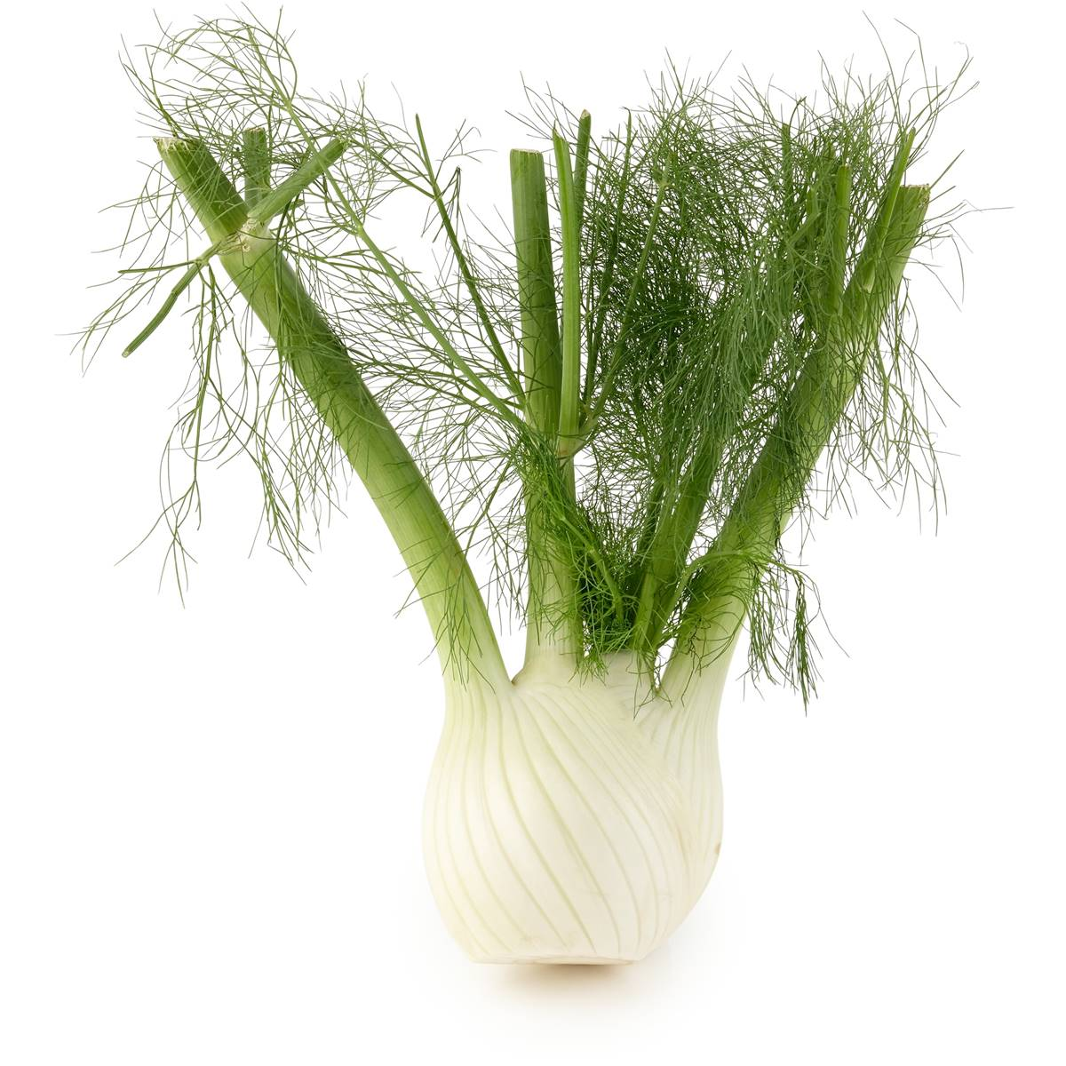 Fennel - Looks Like a Man Sucking a Cock