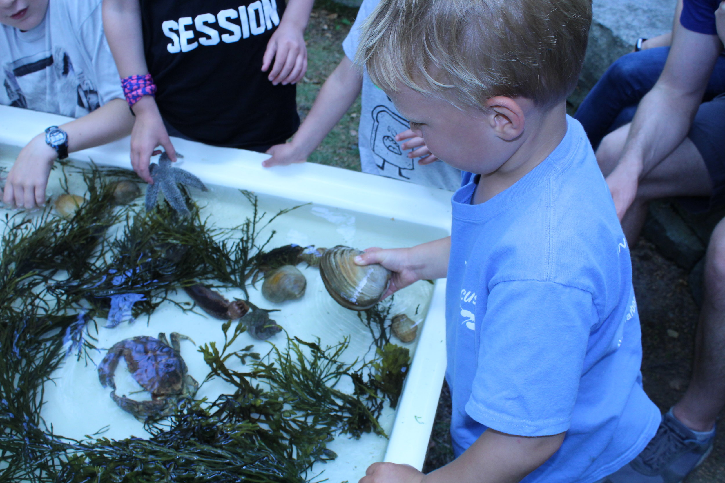 Kid with Clam Touch Tank.JPG